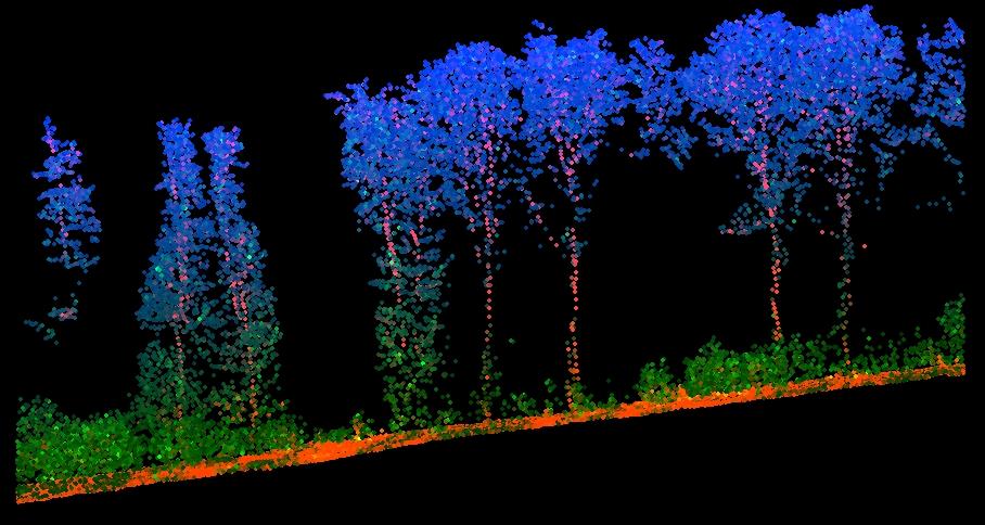 forest_profile_sopron_2