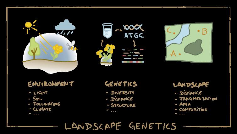 Scheme of landscape genetic analyses