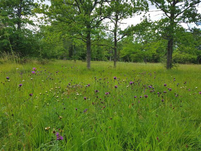 Laelatu wooded meadow, photo: Aveiina